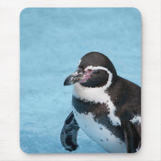 Magellanic Penguin Mousepad