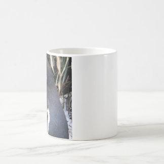 Magellanic Penguin Coffee Mugs