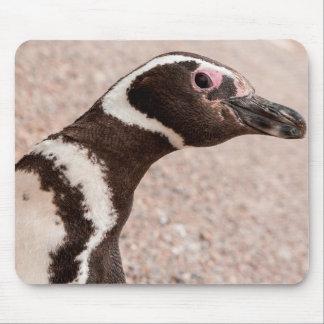 Magellanic Penguin, Patagonia, Argentina Mouse Pad