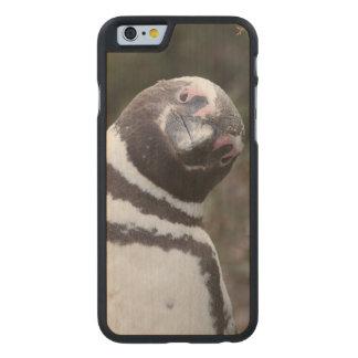 Magellanic Penguin Portrait Carved Maple iPhone 6 Case