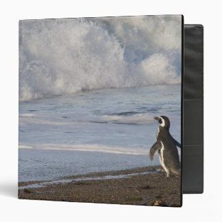 Magellanic Penguin, spheniscus magellanicus, 3 Ring Binder