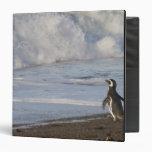 Magellanic Penguin, spheniscus magellanicus, Vinyl Binders