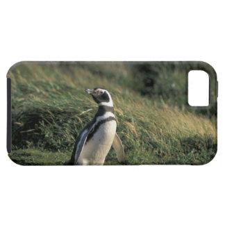 Magellanic Penguin (Spheniscus magellanicus), iPhone SE/5/5s Case