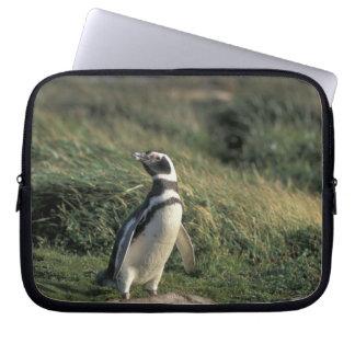 Magellanic Penguin (Spheniscus magellanicus), Laptop Sleeve