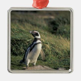 Magellanic Penguin (Spheniscus magellanicus), Metal Ornament