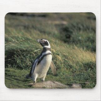 Magellanic Penguin (Spheniscus magellanicus), Mouse Pad