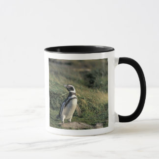Magellanic Penguin (Spheniscus magellanicus), Mug