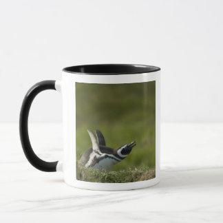 Magellanic Penguin, Spheniscus magellanicus, Mug