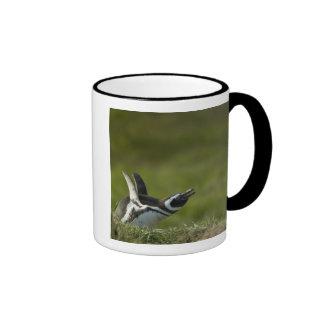 Magellanic Penguin, Spheniscus magellanicus, Ringer Coffee Mug