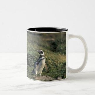 Magellanic Penguin (Spheniscus magellanicus), Mugs