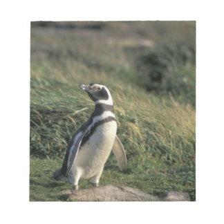 Magellanic Penguin (Spheniscus magellanicus), Notepad