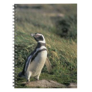 Magellanic Penguin (Spheniscus magellanicus), Spiral Notebook