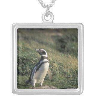 Magellanic Penguin (Spheniscus magellanicus), Square Pendant Necklace
