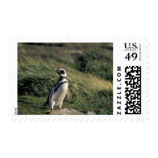 Magellanic Penguin (Spheniscus magellanicus), Stamp