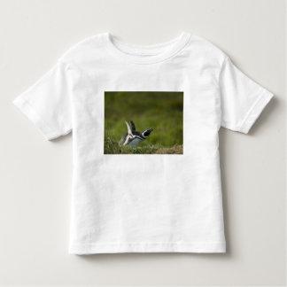 Magellanic Penguin, Spheniscus magellanicus, Toddler T-shirt