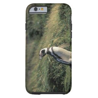 Magellanic Penguin (Spheniscus magellanicus), Tough iPhone 6 Case