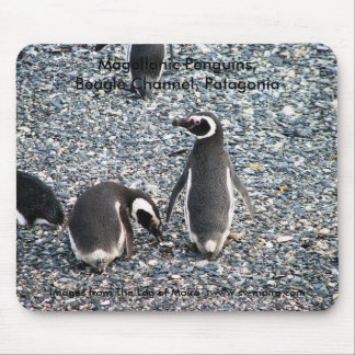 Magellanic Penguins, Beagle Channel, Patagonia Mouse Pad