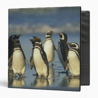 Magellanic Penguins, Spheniscus Binder