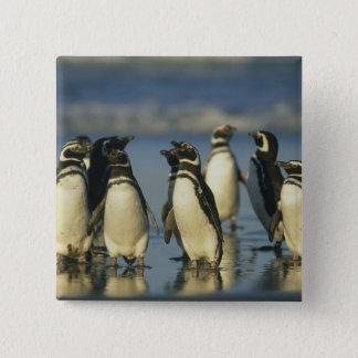Magellanic Penguins, Spheniscus Button