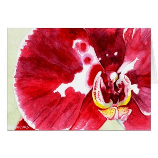 Magent and White Phalaenopsis Orchid Greeting Card