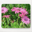Magenta African Daisies Mouse Pad