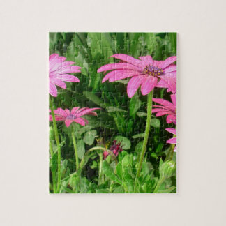 Magenta African Daisies Puzzles