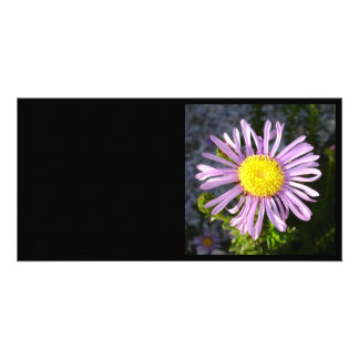 Magenta Aster - A Star of Love and Fidelity Card