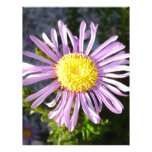 Magenta Aster - A Star of Love and Fidelity Personalized Letterhead