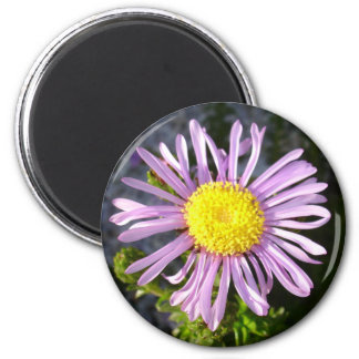 Magenta Aster - A Star of Love and Fidelity Magnet