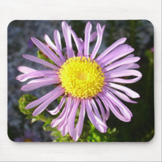 Magenta Aster - A Star of Love and Fidelity Mouse Pad