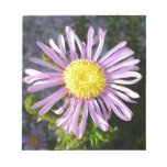 Magenta Aster - A Star of Love and Fidelity Scratch Pad
