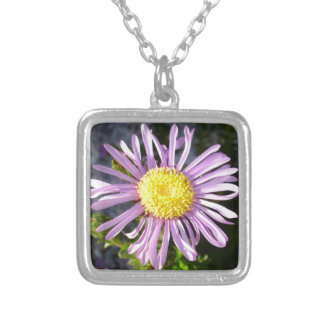 Magenta Aster - A Star of Love and Fidelity Silver Plated Necklace