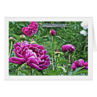 MAGENTA-COLORED PEONIES/BLANK INSIDE CARD