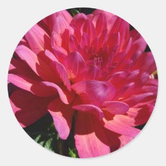Magenta daydream classic round sticker