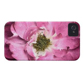 Magenta Flower ~ Rose Petals & Stamens Case-Mate iPhone 4 Cases
