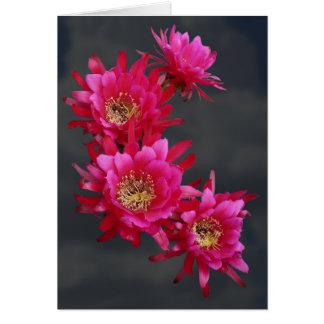 Magenta Hedgehog Cactus Flowers as Card