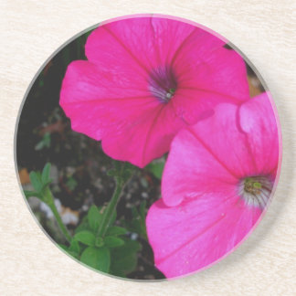 Magenta Morning Glory Flower Coaster