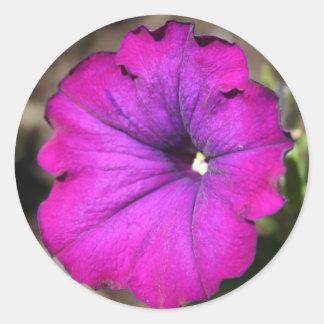 Magenta Petunia Classic Round Sticker