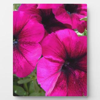 Magenta Petunias Plaque