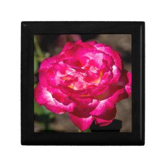 Magenta Pink and White Rose Trinket Box
