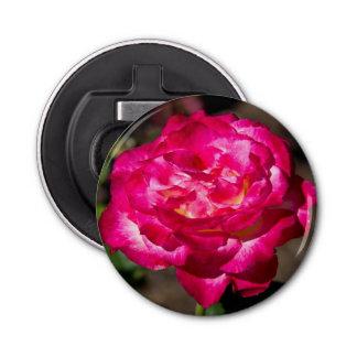 Magenta Pink and White Rose