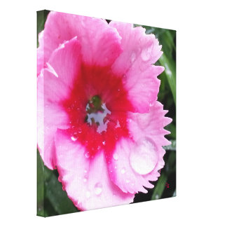 Magenta Pink Carnation Bloom Rain Drops Green Canvas Print
