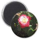 Magenta Pink Rose Magnet