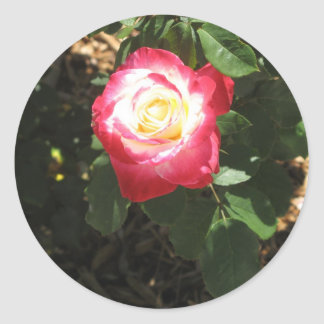 Magenta Pink Rose Sticker