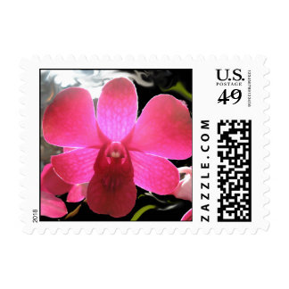 Magenta purple orchid digital photo postage