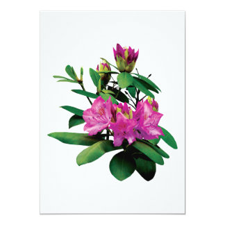 Magenta Rhododendrons With Buds Card