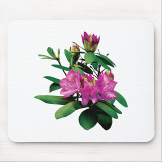 Magenta Rhododendronswith Buds Mouse Pad