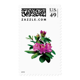 Magenta Rhododendronswith Buds Postage