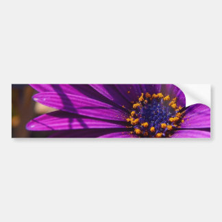 Magenta: The African Daisy Bumper Stickers