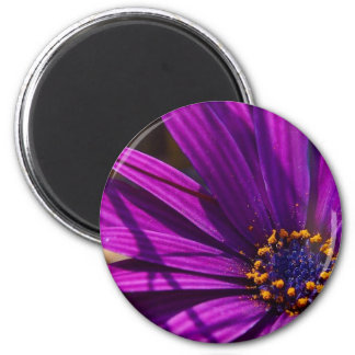Magenta: The African Daisy Magnets